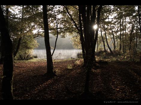 Fe_couleurs_d_automne