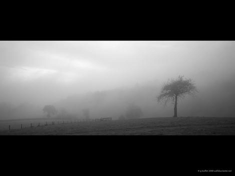 Brume_d_automne